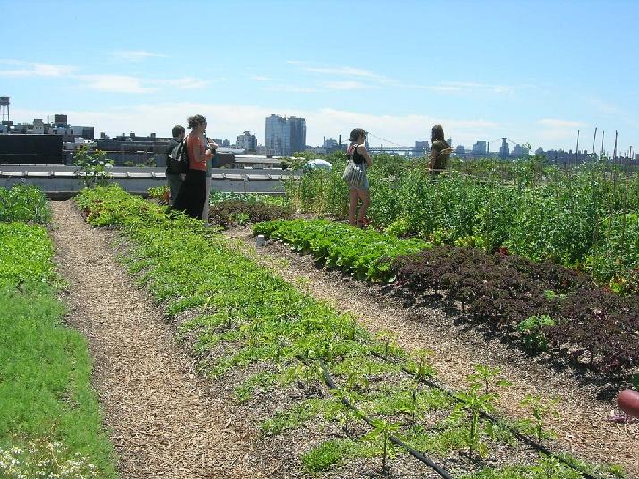 Rooftop garden (Photo Credit:  )