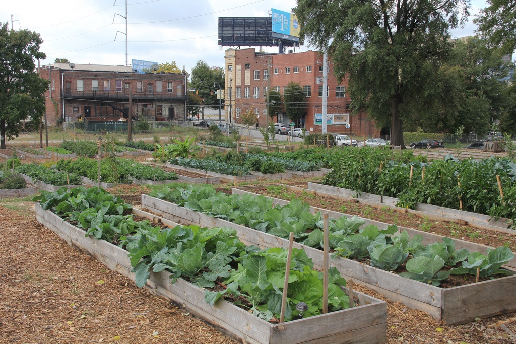 Community garden (Photo Credit: UGA College of Ag and Environmental Sciences)