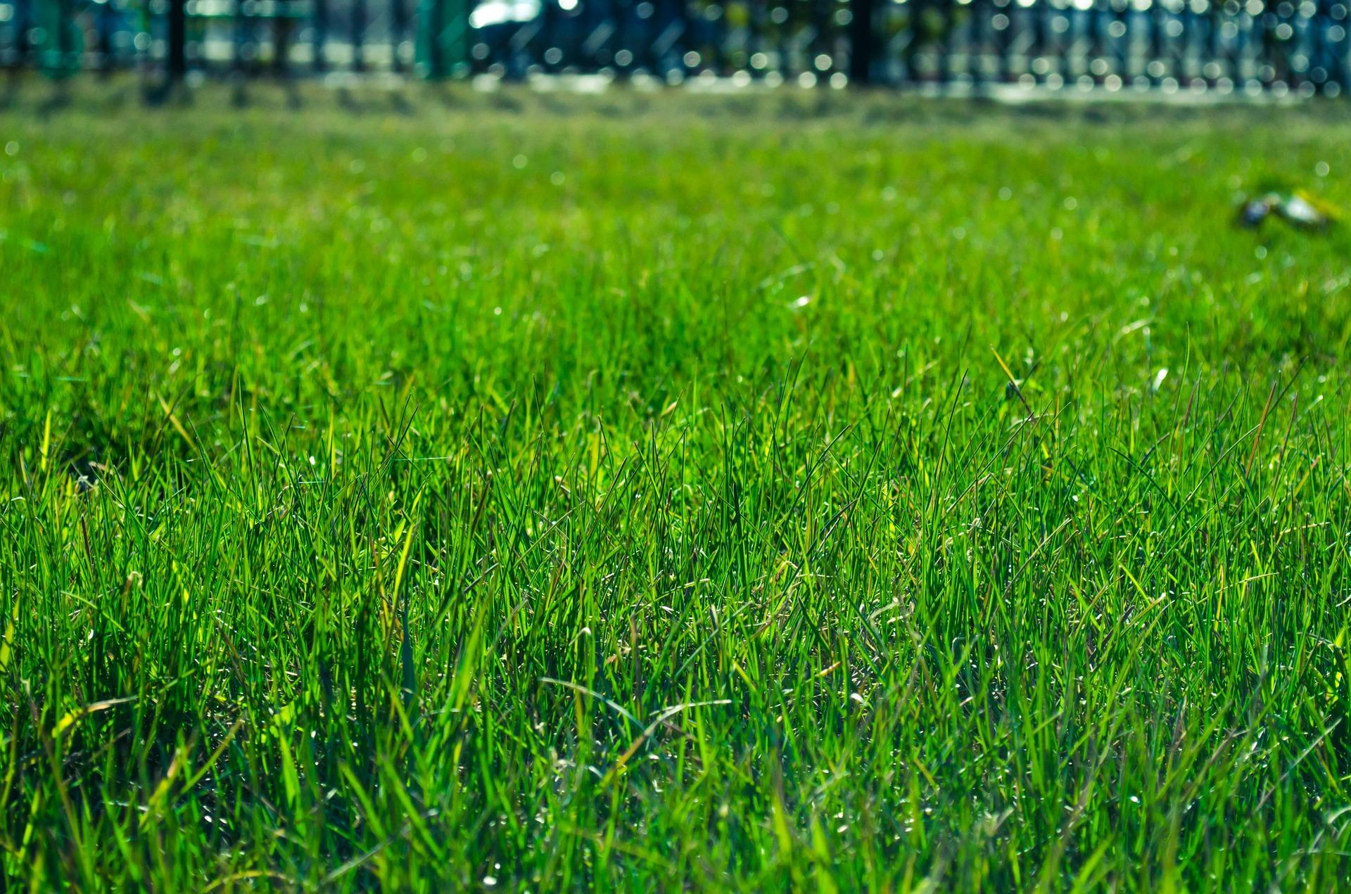lawn-327333_1920
