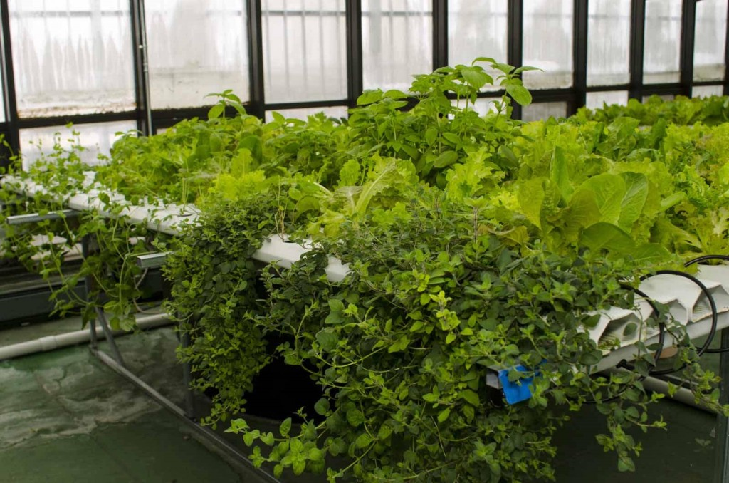 Hydroponic Garden (Photo Credit: Kurman Communications, Inc.)