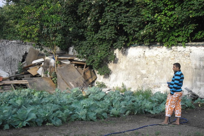 The head of the Ecodrom slum admires the cabbage that his group cultivated. Photo (CC): Ecodrom