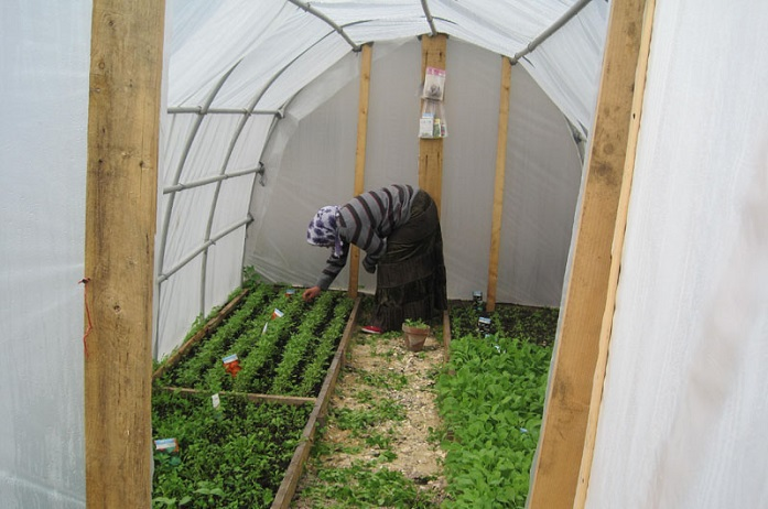 A Romani plucks out the weed in between the planted seeds of the greenhouse. Photo (CC): Ecodrom