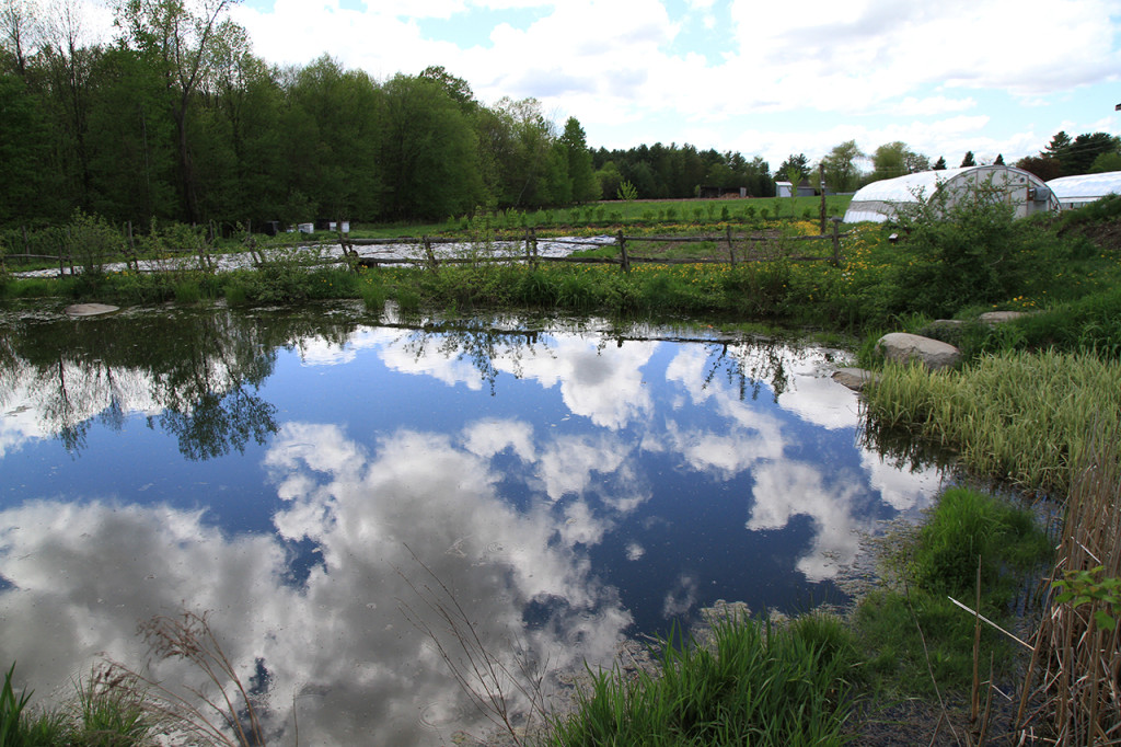The pond at Les Jardins de La Grelinette (from Jean-Martin Fortier)