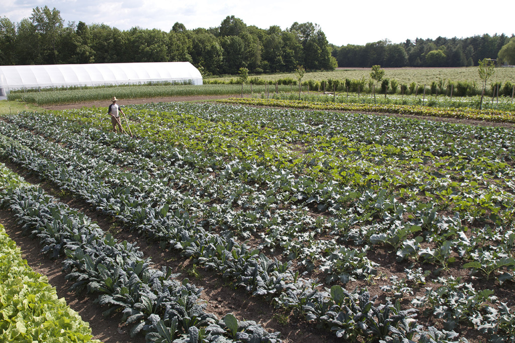 Working in the field of greens sans tractor (from Jean-Martin Fortier)