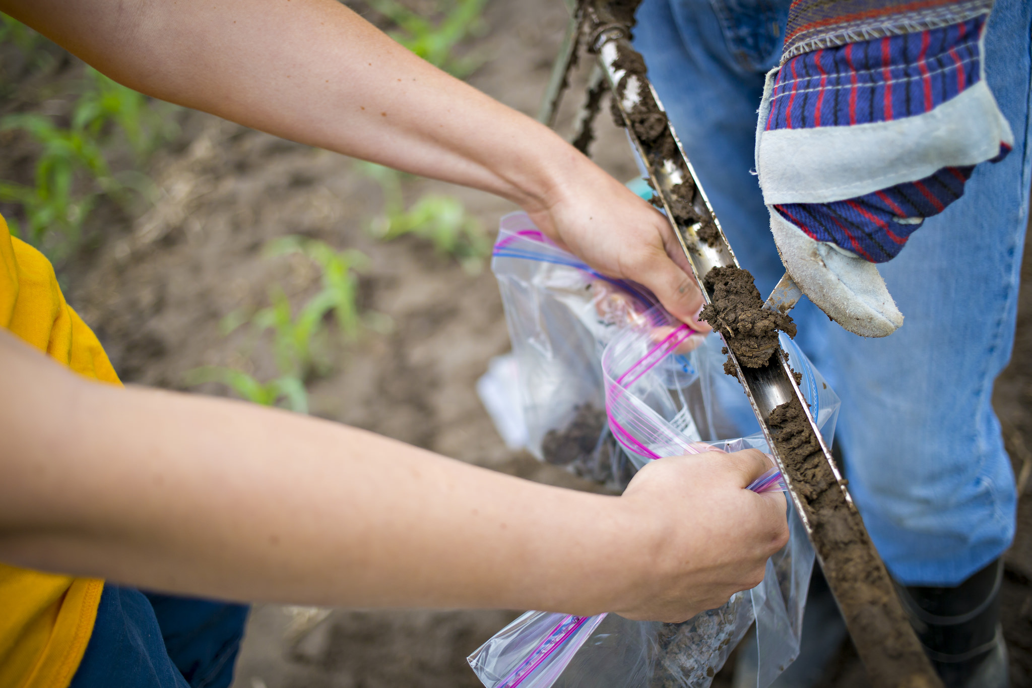 Soil sampling (Photo Credit: College of Ag, Food, and Natural Resources)