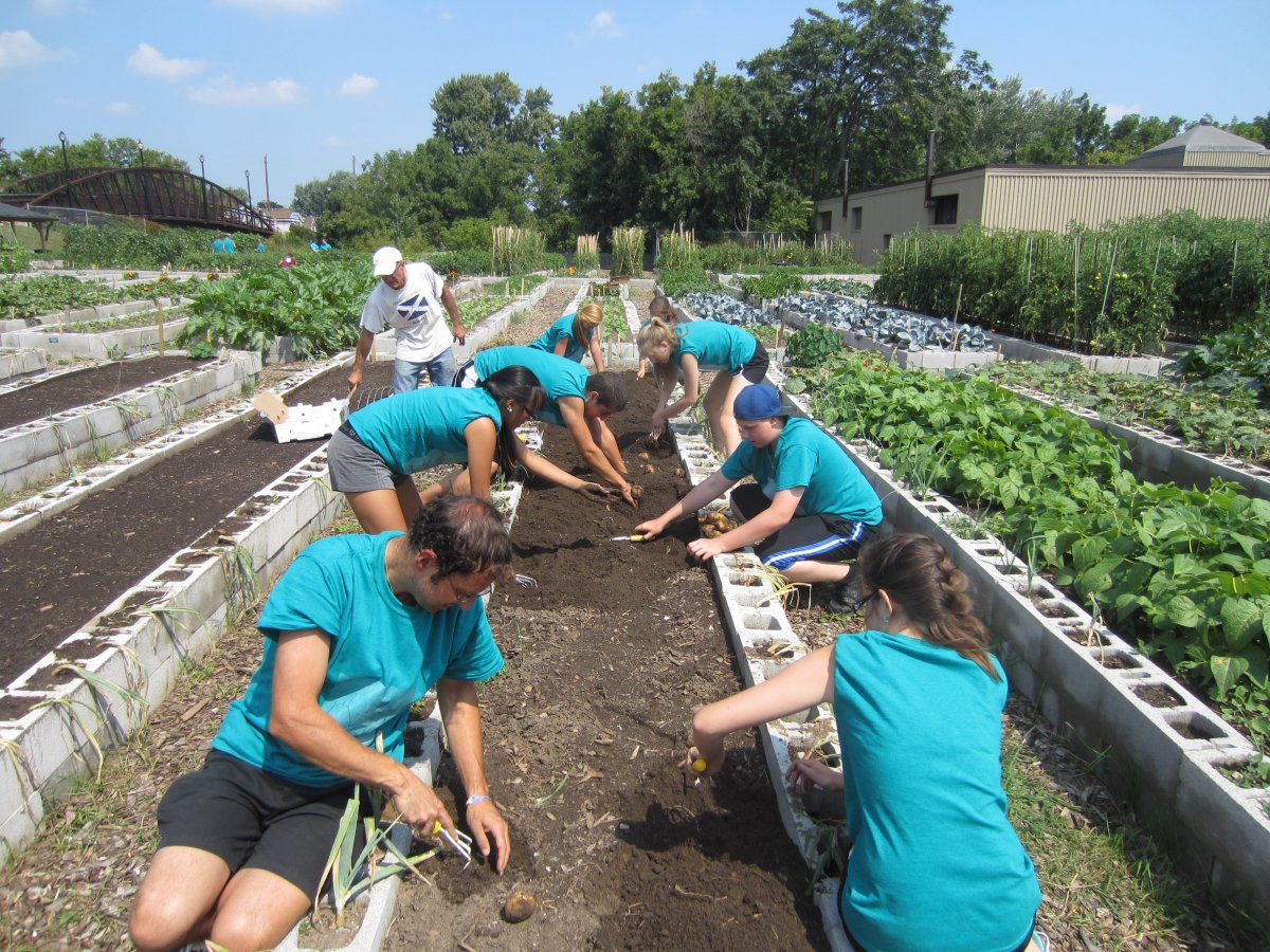 The Victory Gardens rely on hundreds of volunteers to build, plant, and harvest the garden beds. (Photo Credit: Hamilton Victory Gardens)
