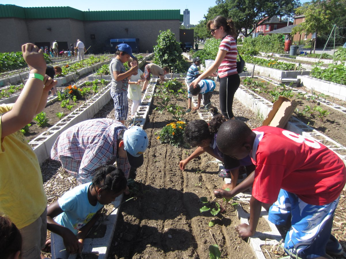 The Victory Gardens host educational programming for children, allowing them to get hands-on experience in the gardens while learning about nutrition, growth cycles, and the importance of giving back to the community. (Photo Credit: Hamilton Victory Gardens)