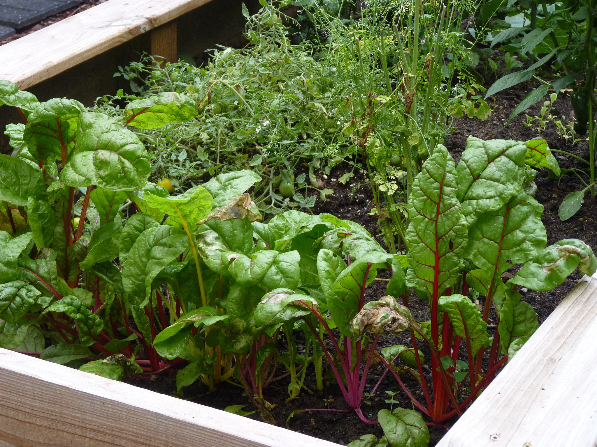 "Growing at least some of our own food is an important part of building an ""ecology of eating."" (Photo Credit: normanack)"