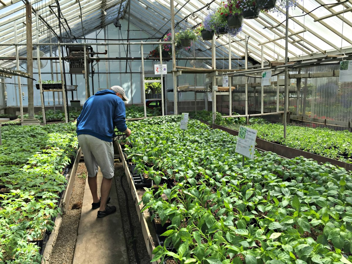 Kellners Greenhouse in Milwaukee, Wisconson. (Photo Credit: Mike & Molly)