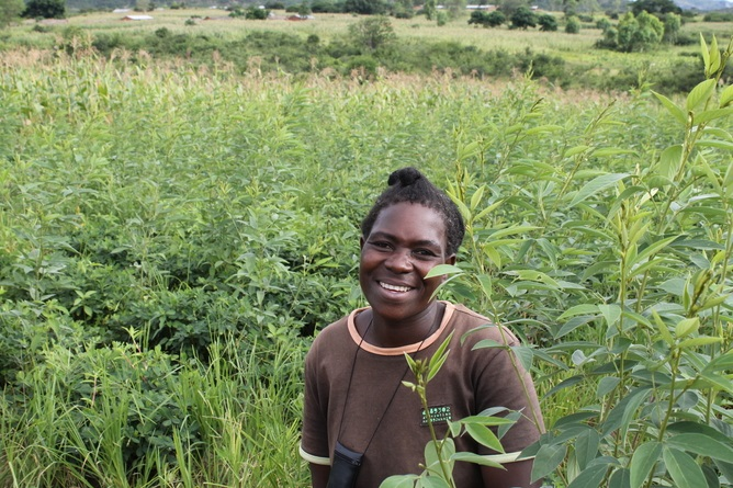 Farmers who use agroecological methods have been more resistant to fluctuations in weather. Jessie Kaunda, a participating farmer, standing in her pigeonpea and maize field in March 2014. (Photo Credit: Carmen Bezner Kerr)