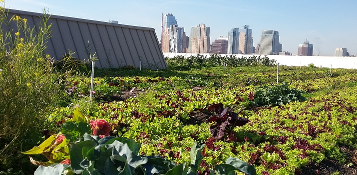 View of Brooklyn Grange and its oceans of lettuce