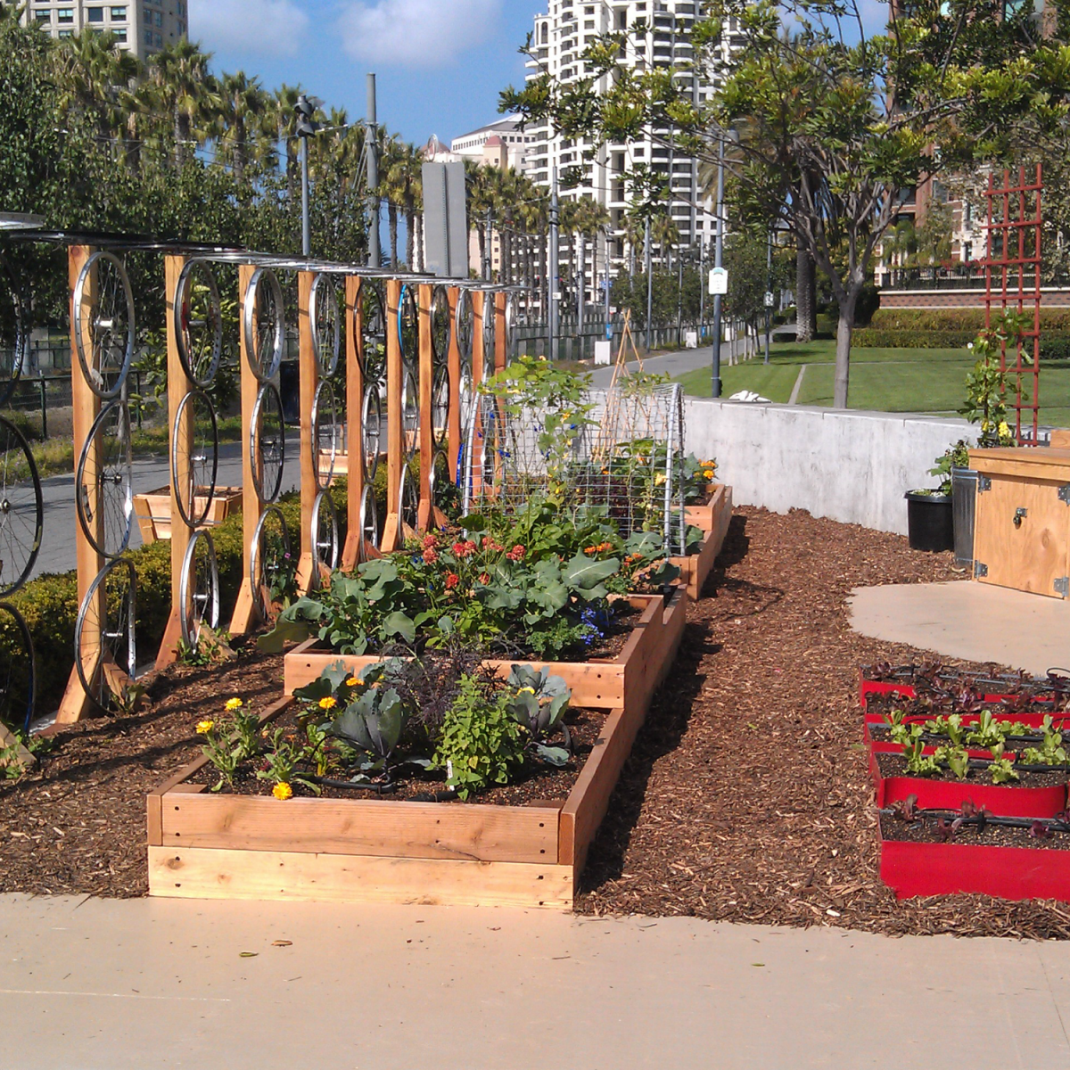Garden installed and maintained by Urban Plantations at the New Children's Museum in downtown San Diego (Photo Credit: Urban Plantations)