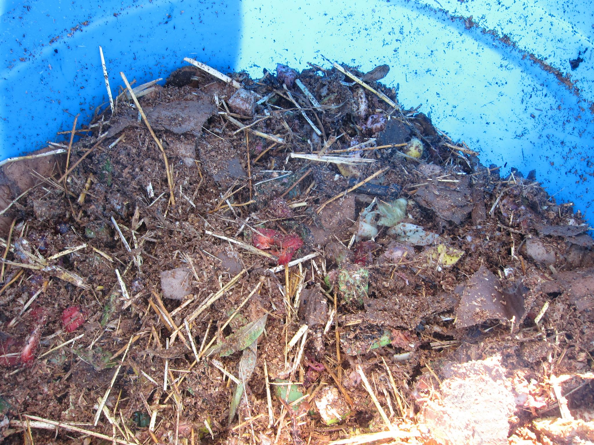 Worm bin (Photo Credit: Root Simple)