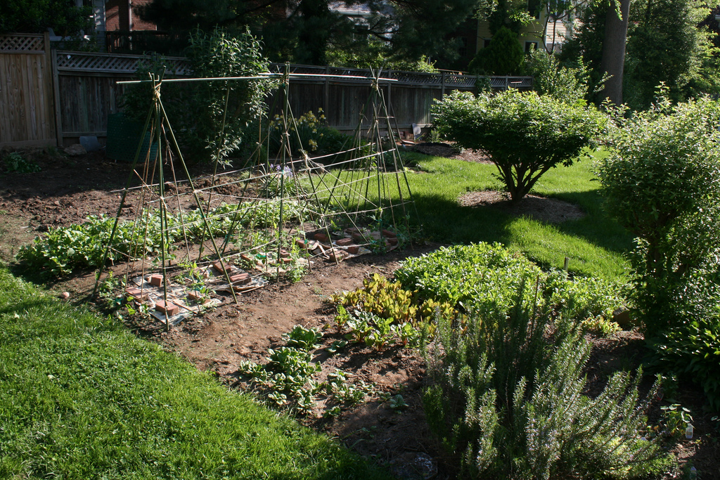 Backyard farm (Photo Credit: woodleywonderworks)