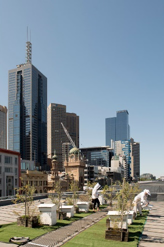 Between the skyscrapers of Melbourne the hives have found their place to be(e). | Photo (CC BY-ND): Wesley Nel
