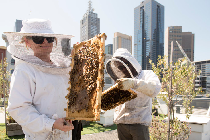 Currently, bees thrive better in Australia than in any other country. | Photo (CC BY-ND): Wesley Nel