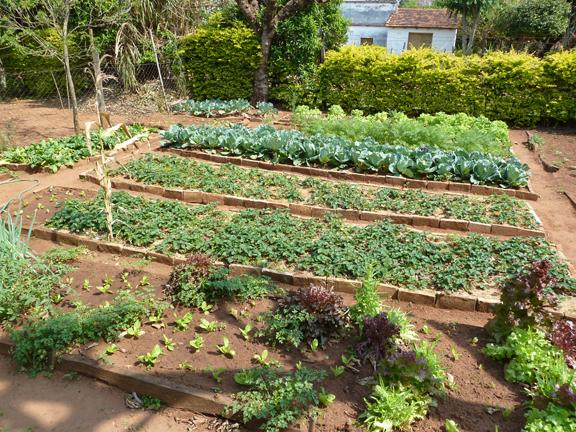 Prosperous veggie garden (Photo Credit: sfgamchick)