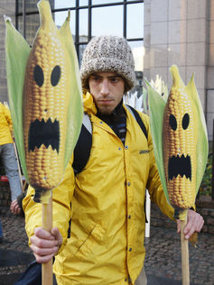 An anti-GMO protest in Belgium in 2008: resistance to genetically modified foods is stronger among European consumers than those in the US. Thierry Roge/Reuters