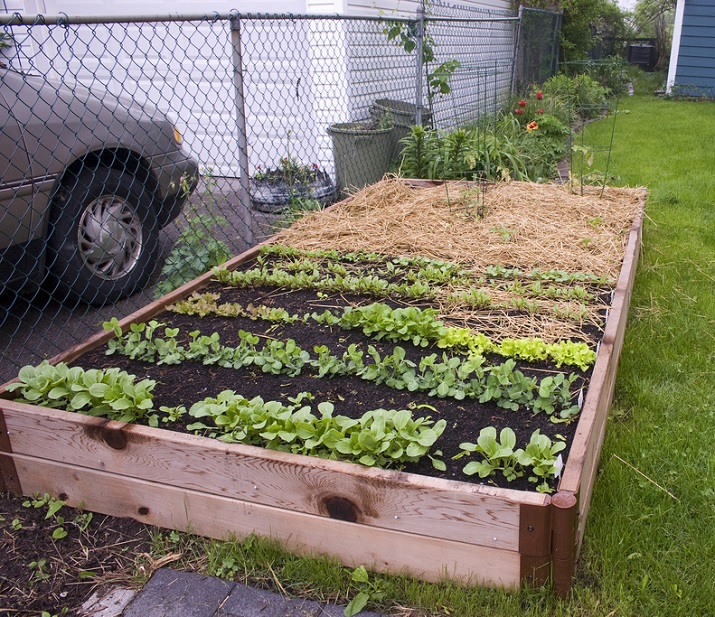 Raised bed gardening (Photo Credit: B D T)