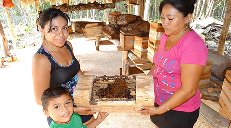 On the Yucatan Peninsula, women's beekeeping collectives are reviving traditional practices of raising native bees and harvesting their honey for medicinal purposes. Photo courtesy of REPSERAM