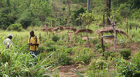Bees living in hives strategically placed around the perimeter of farm fields in Tanzania help keep hungry elephants away from crops while also providing honey and pollination services. Photo courtesy of STEP (Southern Tanzania Elephant Project)