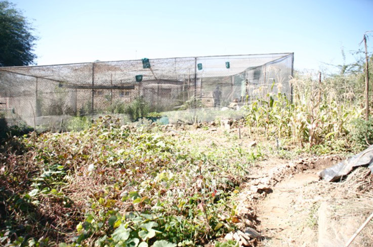 Iyimati's small green house in Hakahana. Photo: Ines Bresler