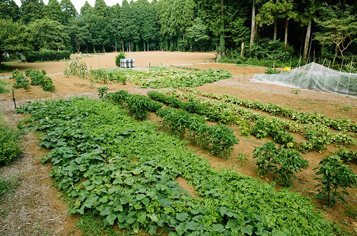 On the NOCA?! fields, the summer vegetables are thriving. © Masaya Tanaka