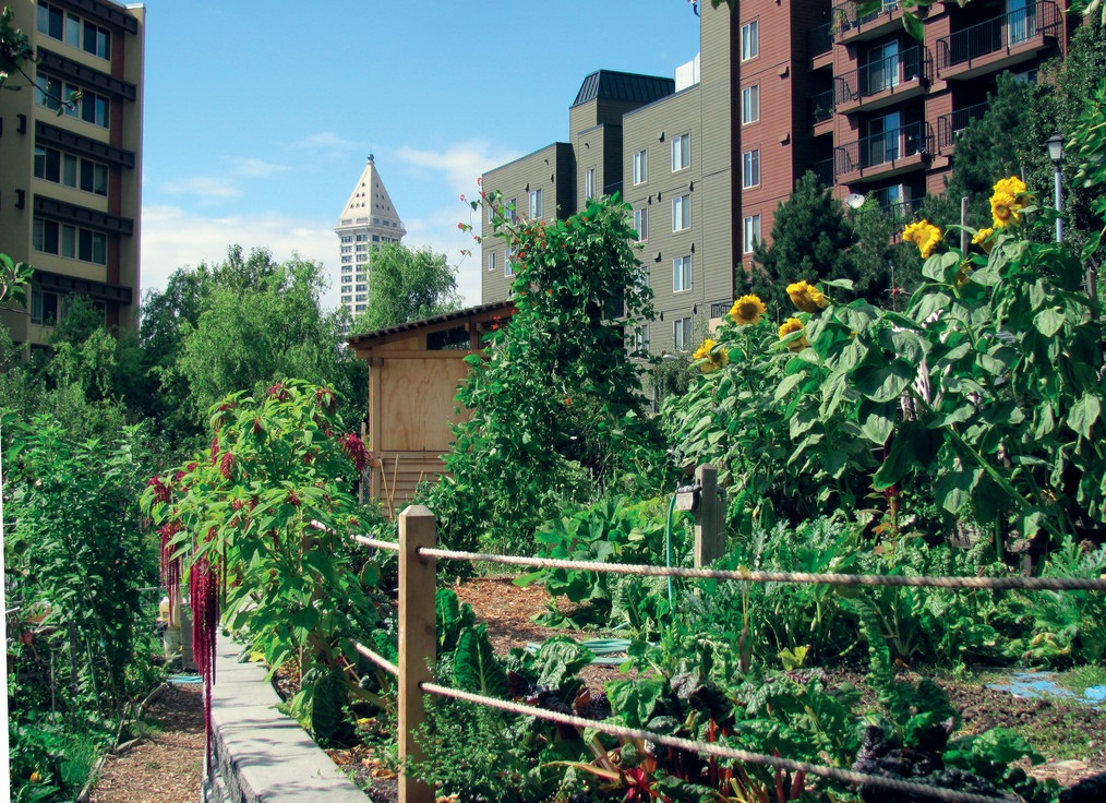Garden wherever you can (Photo Credit: Seattle Parks)
