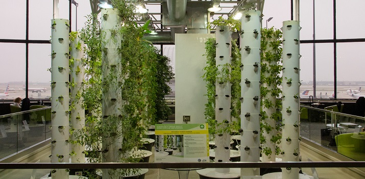 Aeroponics towers (Photo Credit: Edward Blake)