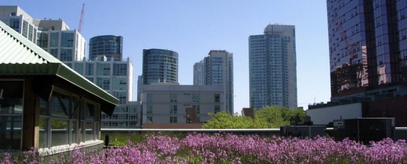 A rooftop garden in downtown Toronto, Canada. Urban green spaces are strongly associated with increasing public health. (Photo Credit: Sookie)