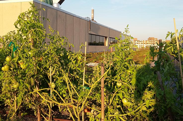 The University of the District of Columbia's rooftop farm. Photo (CC BY-SA): Erik Assadourian.