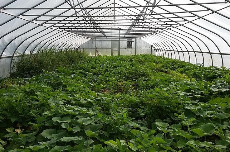 Hoop house at UDC's Firebird Farm. Photo (CC BY-SA): Erik Assadourian.