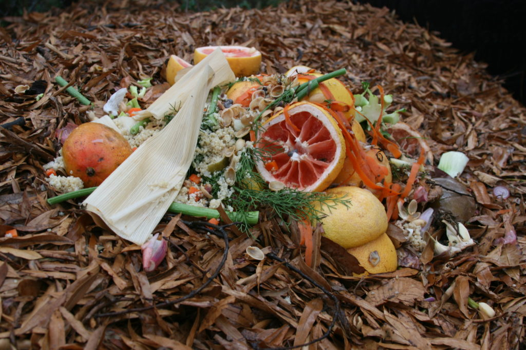 Household compost. (Photo Credit: Rebecca Murphey)