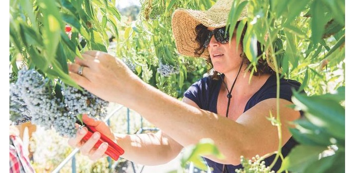 Public Food Forests on the Rise