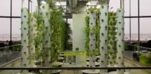 SoCal University's Aeroponic Garden Challenges Food System Status Quo