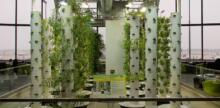 SoCal University's Aeroponic Garden Challenges Food System Status Quo