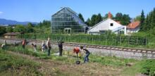 Allotment Holders Cultivate Public Space