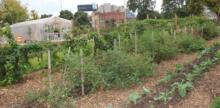 The City of Atlanta Hires First Urban Agriculture Director