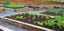 No garden? Five creative ways city dwellers can still grow their own