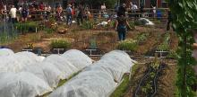 Common Good City Farm Brings D.C. Community Together