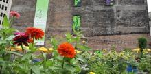 Urban Ag Organization Hopes to Get All Residents on Board to Keep Growing Detroit
