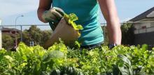 Grassroots Efforts Target Food Insecurity in San Bernardino County, CA
