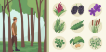 Urban Foraging: The Ultimate in Local Eating
