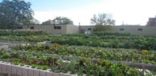 Gardening for Victory: One Battle for Urban Food Security