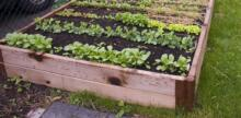 Former Pro Golfer Leaves Links to Pursue Promise of Greener Urban Farming Pastures