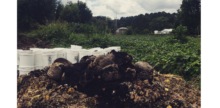 Grow. Eat. Repeat. Startup Sees Cash in Compost