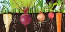 Grounded: Why Soil Matters to the Health of the Planet and Us