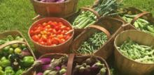 South Carolina Teen Grows National Garden Organization to Feed Families in Need