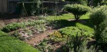 Colorado Man Transforms Backyards into Micro Farms