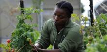 Former Black Panther Creates Urban Farm for Ex-Prisoners, but it's Just the Beginning